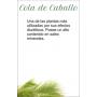 COLA DE CABALLO 20 filtro Artemis